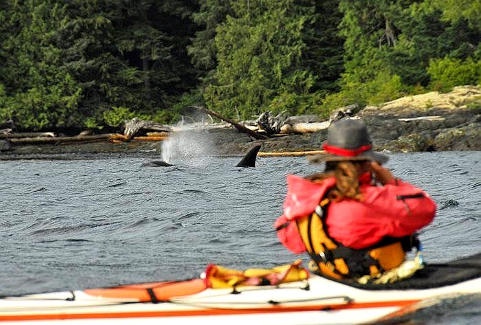 whale%20and%20kayaker%20photo.jpg