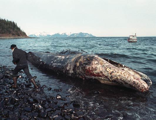 dead-whale1.jpg